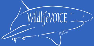 WildlifeVOICE.org